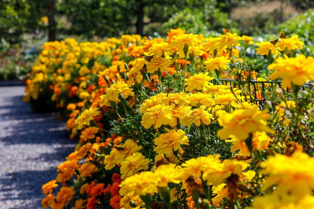 Que planter dans un jardin en septembre