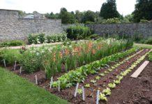 Que planter en août au potager et dans le jardin