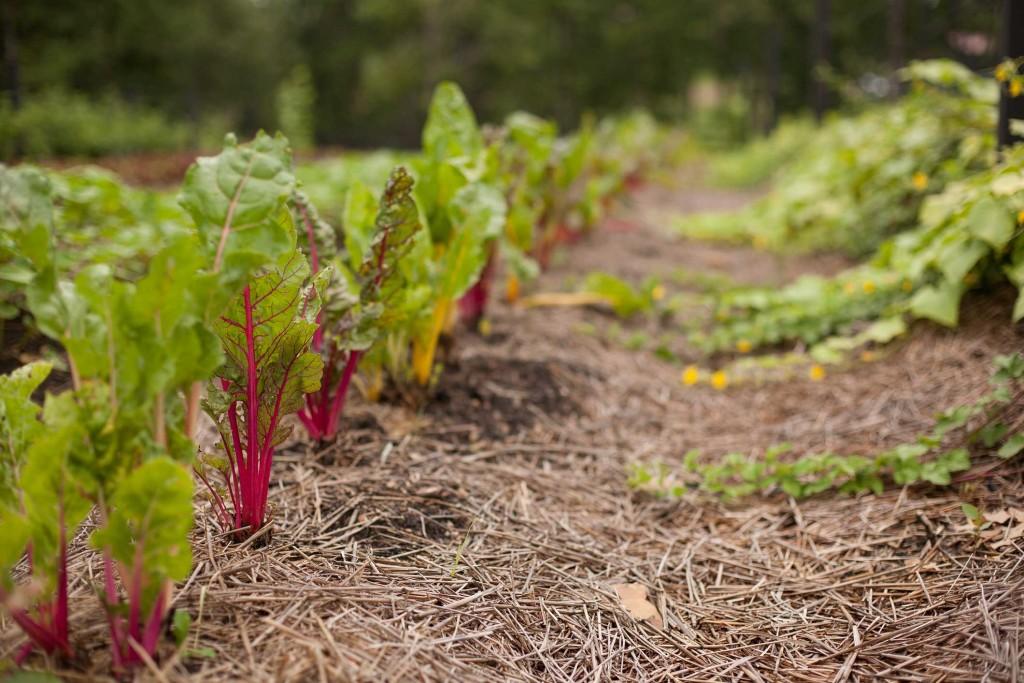 Que planter en avril au potager et dans le jardin