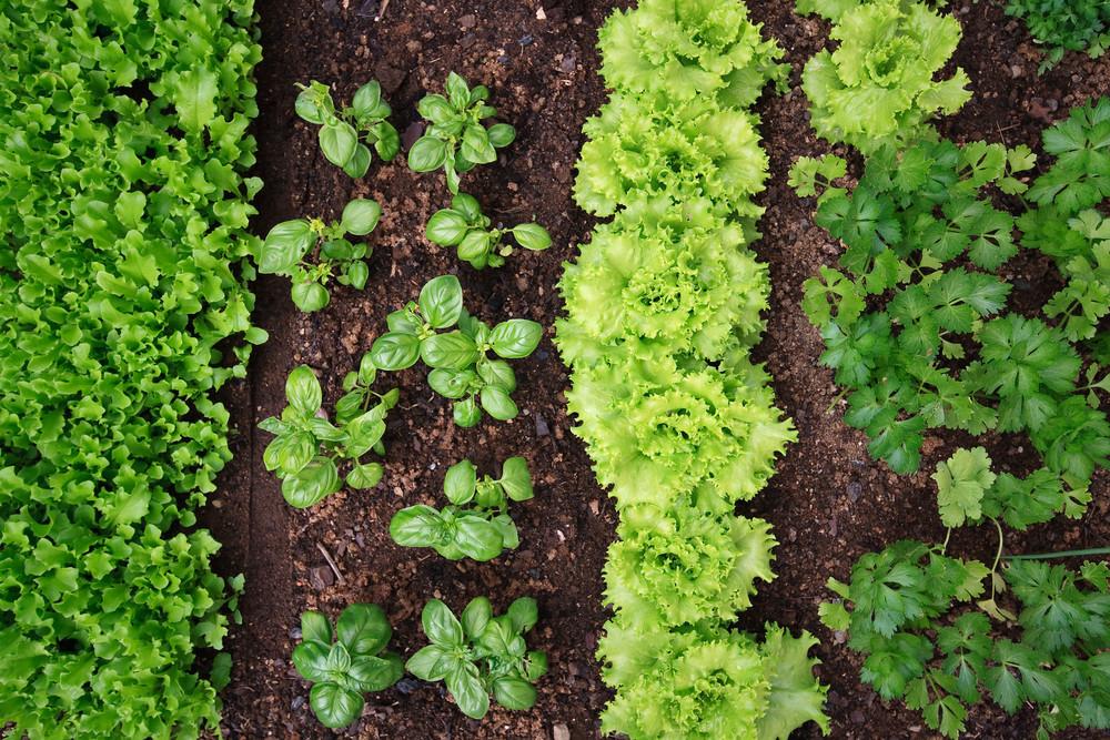 Que planter en juillet au potager et dans le jardin