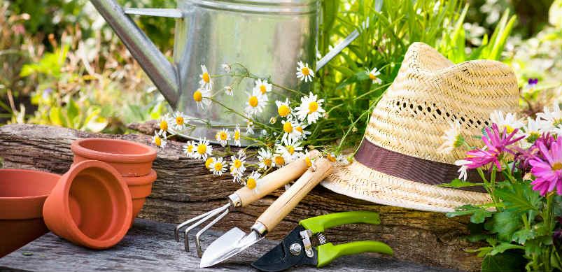 Que planter en juin au potager et dans le jardin