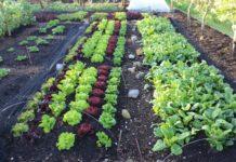 Que planter en mai au potager et dans le jardin