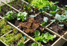 Que planter en mars au potager et dans le jardin