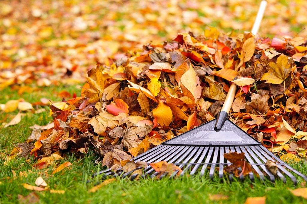 Que planter en novembre au potager et dans le jardin