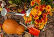 Que planter en octobre au potager et dans le jardin