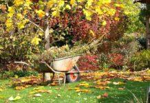 Que planter en septembre au potager et dans le jardin