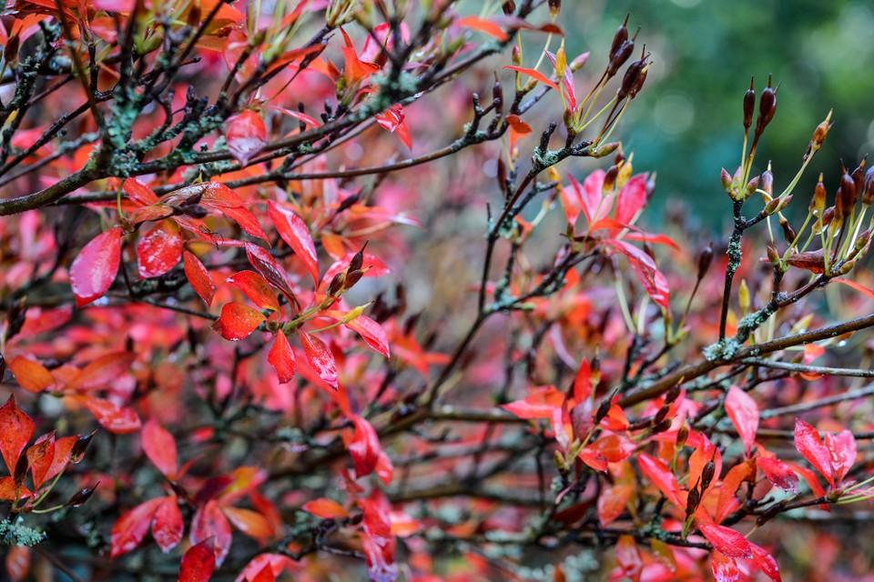 Quels arbres et arbustes planter en novembre