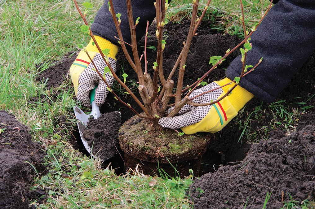 arbres à planter en décembre