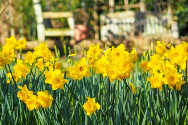 fleurs au mois de mars