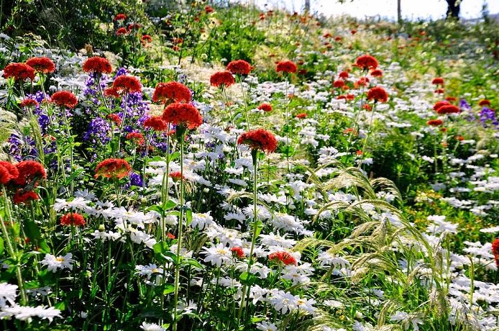 planter les fleurs en juin