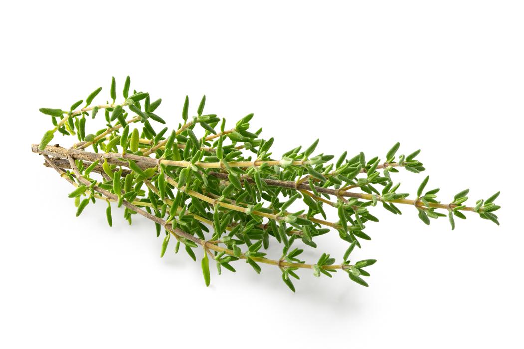 plante medicinale - thym