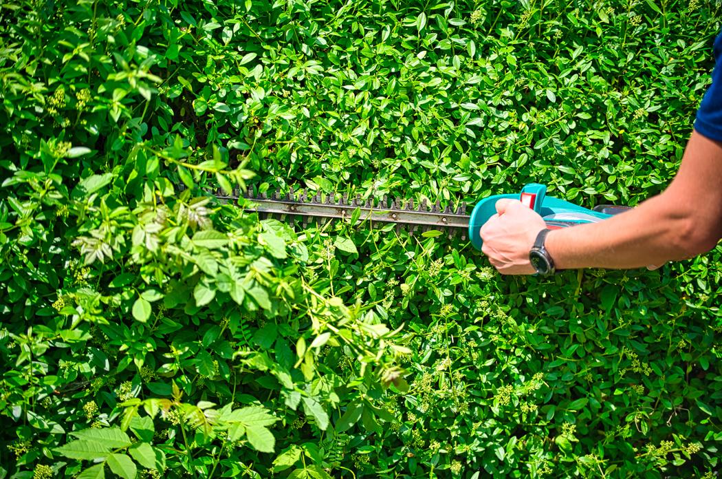 outils de jardinage printemps