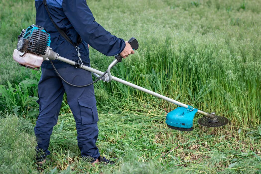 Comment transformer un terrain en friche en pelouse ?